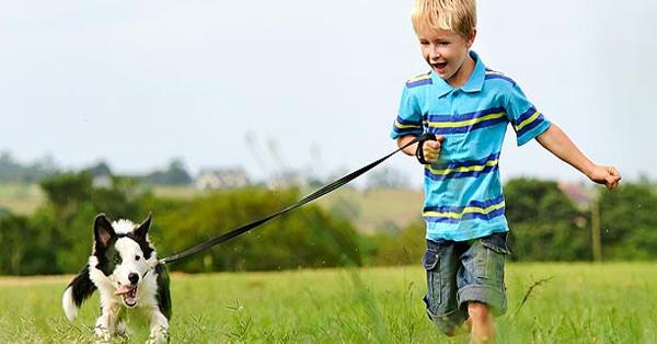 Top 5 Pet Friendly Areas in Dubai